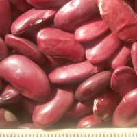 pu-beans-red2