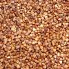 thumb_ce-buckwheat2