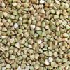 thumb_ce-buckwheat-kernel