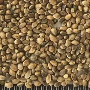 oi-hemp-seed2