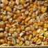 thumb_ce-corn-yellow