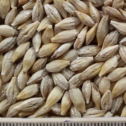 ce-barley2
