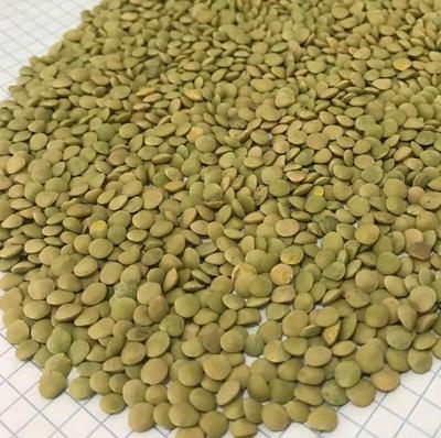 pu-lentils-g2